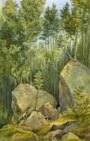 "Daniel Wilson's watercolour - ""Road to the Pool, Pemigewasset River, N.H., Aug 16 1881"